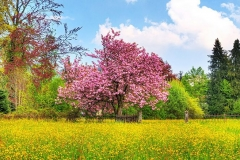 [wallcoo_com]_Cherry_Tree